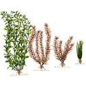 Tetra WaterWonders Series 3 Decorative Aquarium Plants (Assorted 6