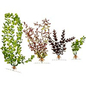 Tetra WaterWonders Series 5 Decorative Aquarium Plants (Assorted 6